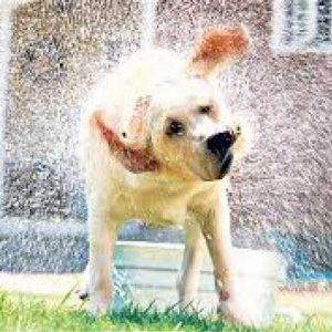 water saving outdoor dog wash pack