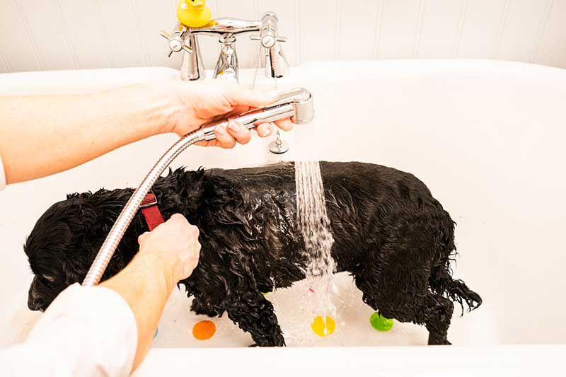pet-wash-shower-head-pack-quick-fit-tap-aerator-shower-pack-hose-every-drop-is-precious-small-file-76
